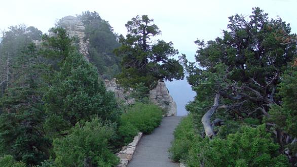 Foggy Canyon