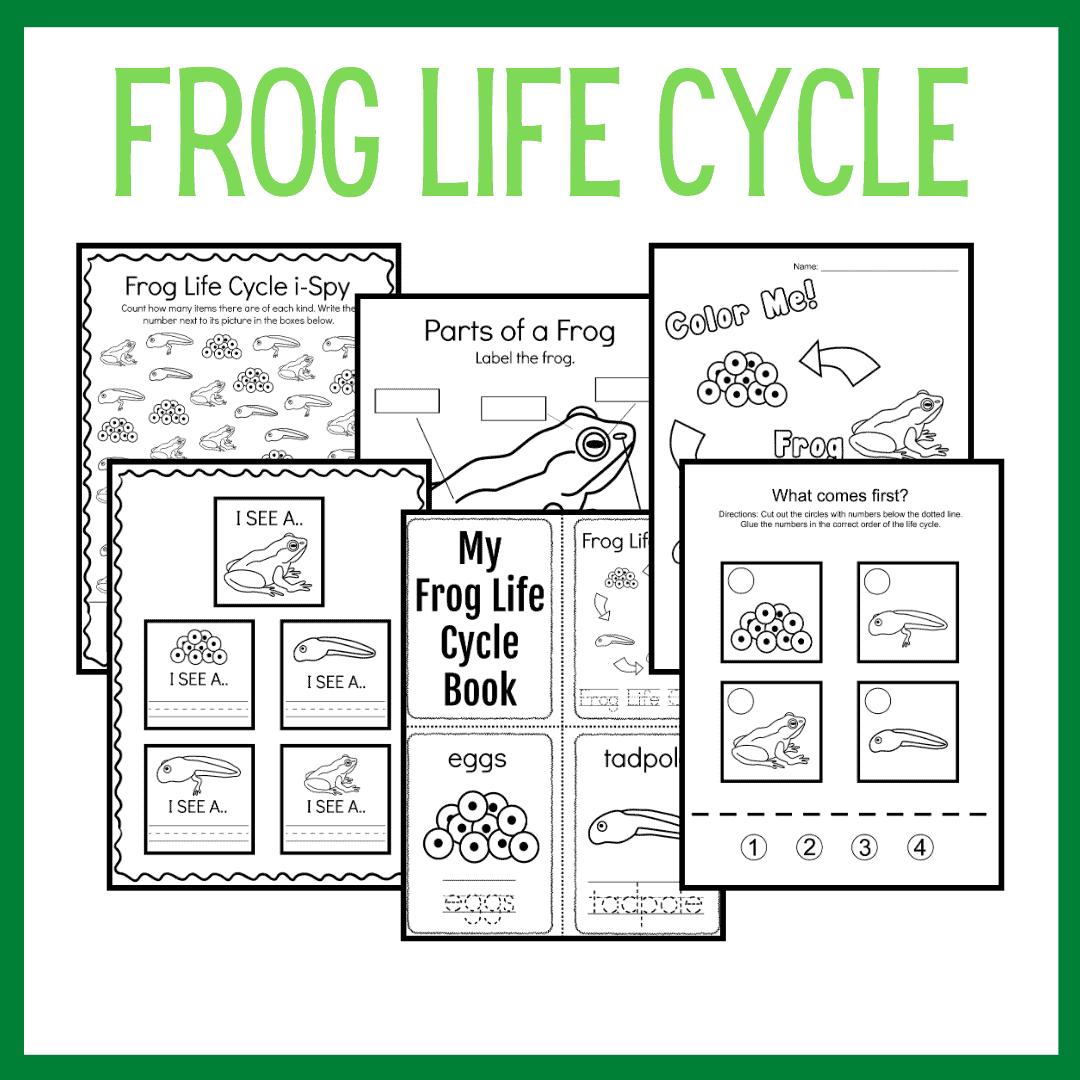 Printable Frog Life Cycle Preschool Activities