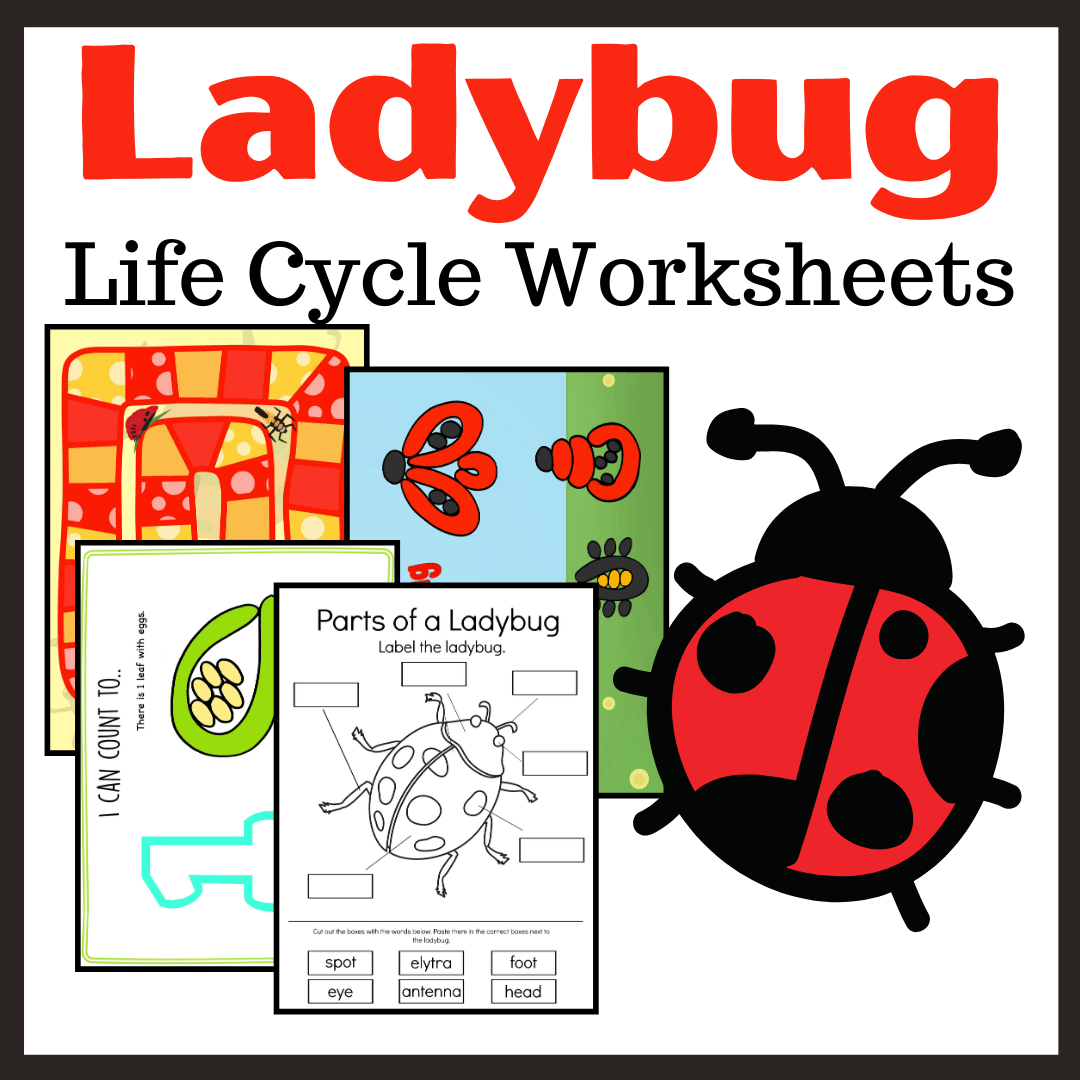Printable Ladybug Life Cycle Activities For Preschool