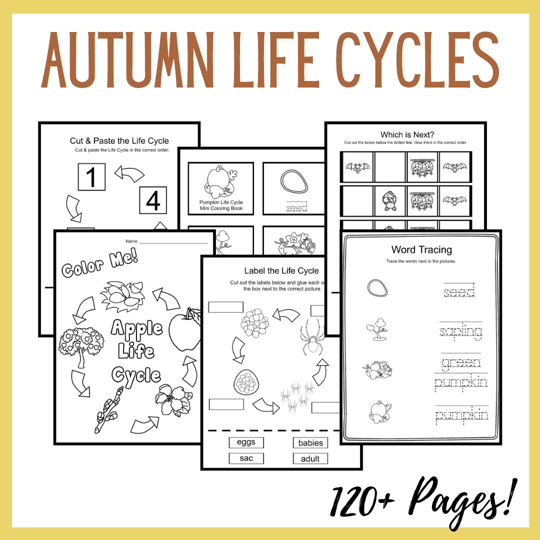 Autumn Life Cycle Worksheets For Preschoolers