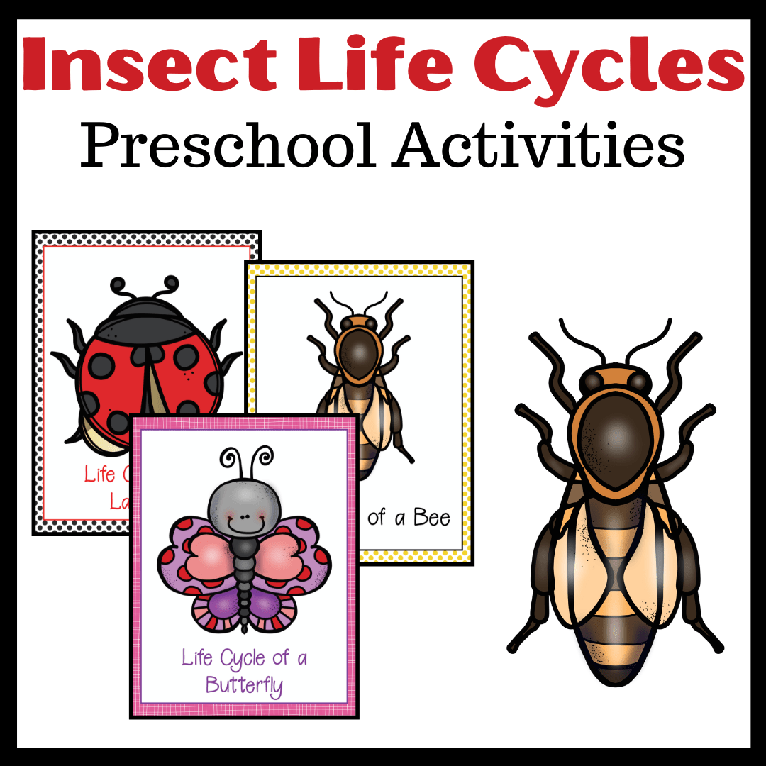 Printable Life Cycle Of Insects For Preschool