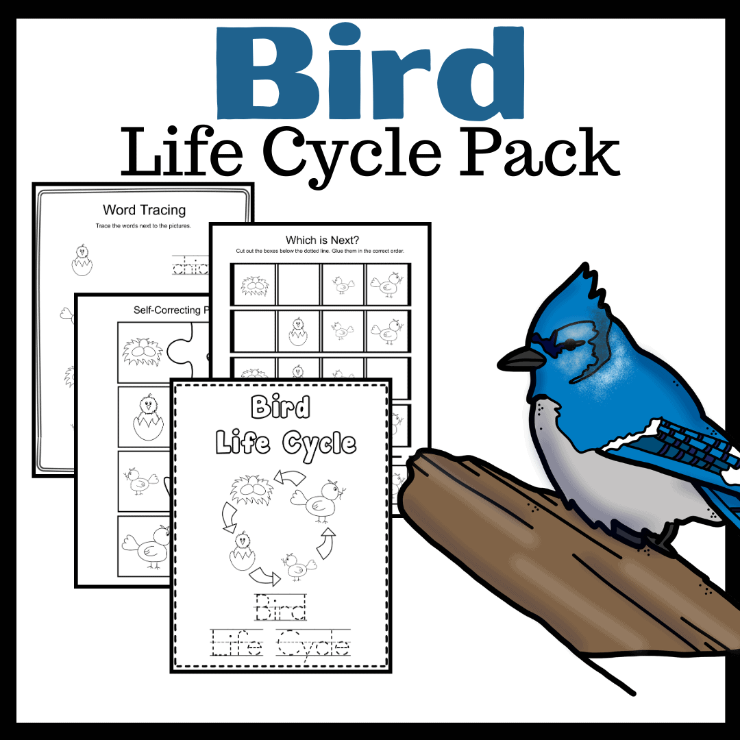 Printable Activities To Teach Life Cycle Of A Bird For Kids