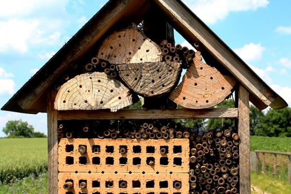 homeschool room essentials outdoor learning space: bee house made out of wood