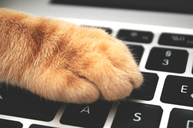 keyboard with a cat paw on it like it's practicing free typing games