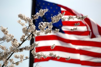 What Is Independence Day or Fourth of July in USA American flag waving behind a cherry blossom tree limb