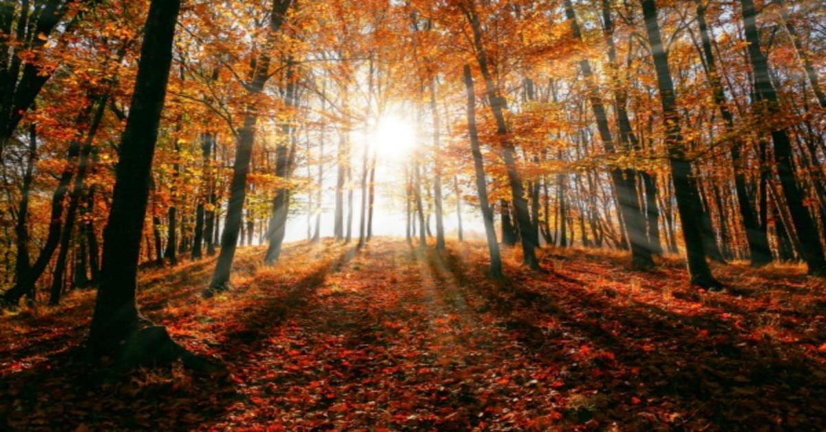 Fall Equinox Lesson Plans fall sunshine through trees with orange leaves falling