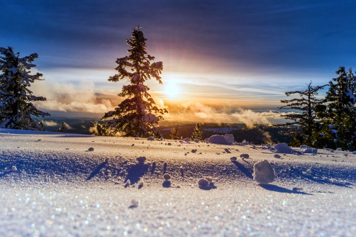 Evergreen tree on snow with sun in the background What Is Winter Solstice?