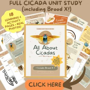 Cicada Printable