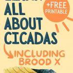 FREE CICADA PRINTABLE