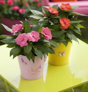Unique Indoor Plants for Fresh Interior   HomesFeed adorable and colorful unique indoor plants idea with pink and red colors  and pink and yellow