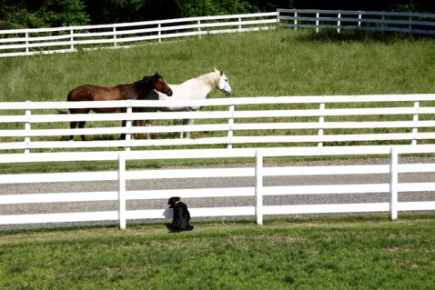 Equestrian Home near NYC