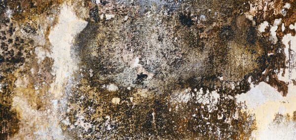 Buying or Selling a Home With Mold?