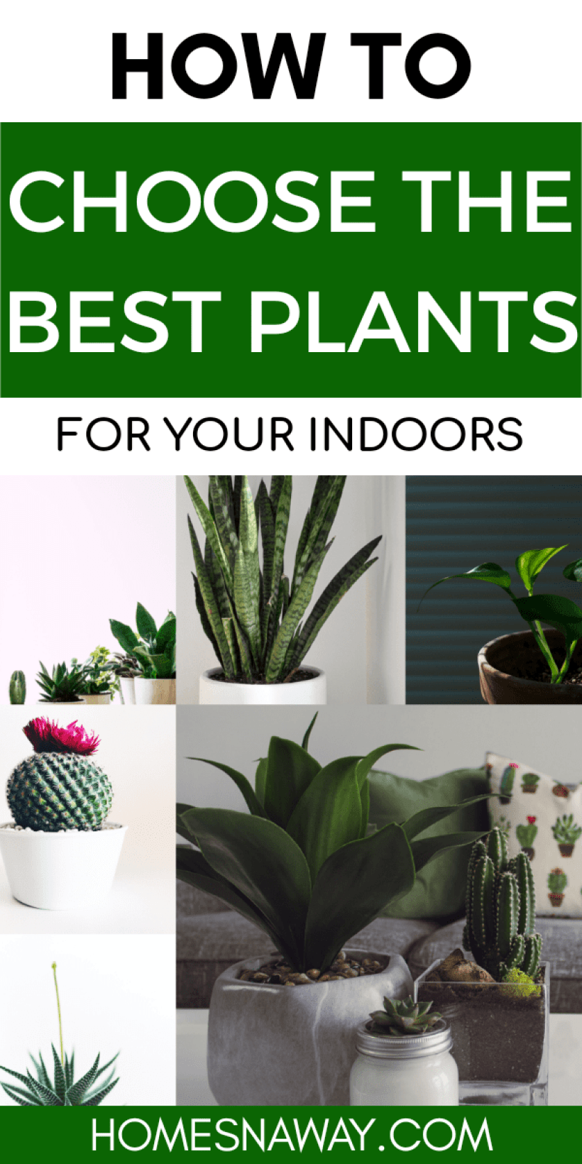 The Best Indoor Plants For Beginners{Tips From An Expert}