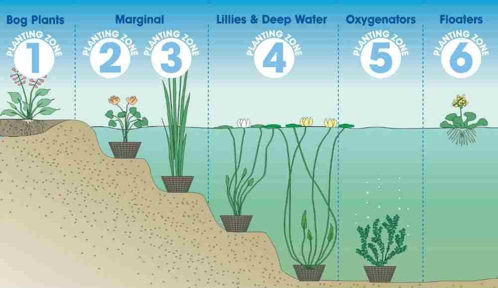 20 Pond Ideas To Brighten Up & Add Interest To Your Yard