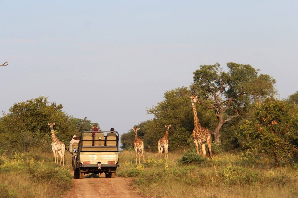 Game Drive South Africa
