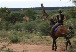 Paardrijden door Zuid-Afrika
