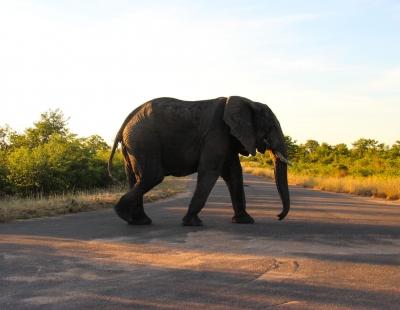 overnachten in het krugerpark? \u003e\u003e lees onze tips! homes of africaolifant overnachten krugerpark