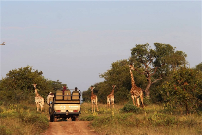 Game Drive in Kruger Park - South Africa