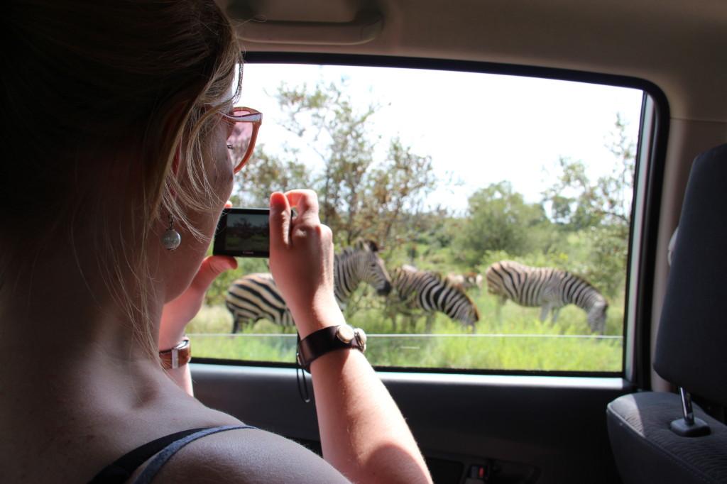 Zebras spotten in het Krugerpark
