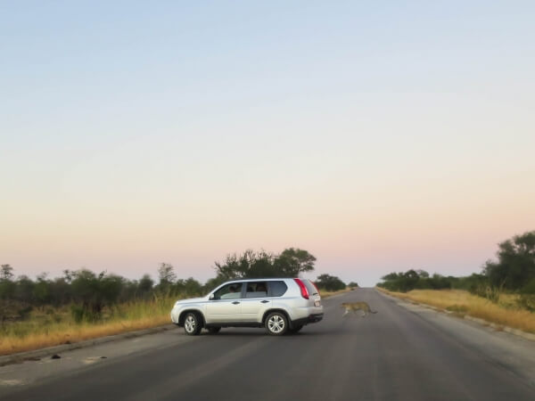 5 important tips for a stay in the Kruger Park | Homes of Africa