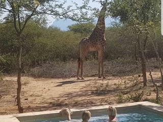 Giraffe near vacation rental South Africa