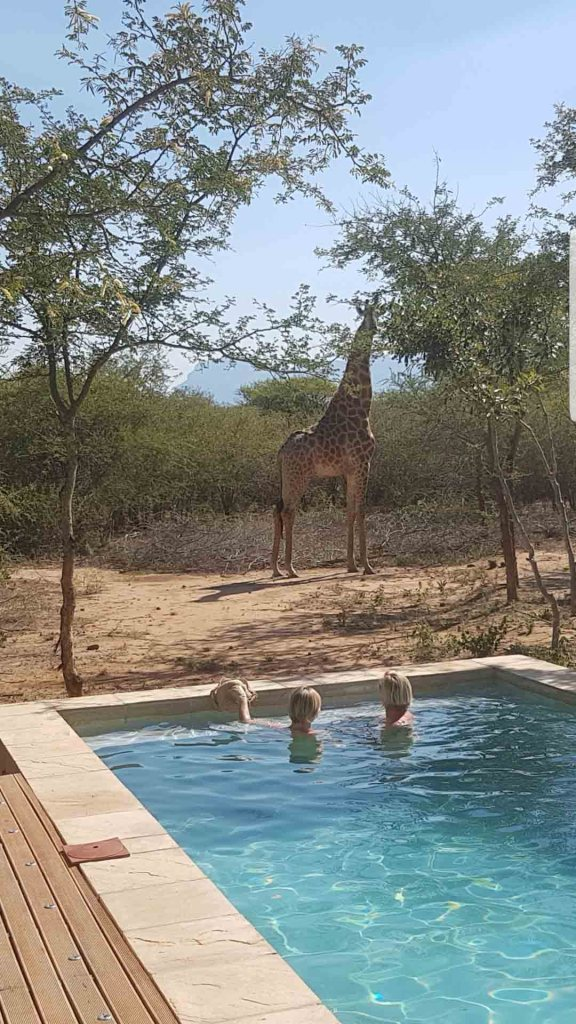 Giraffe near vacation rental South Africa