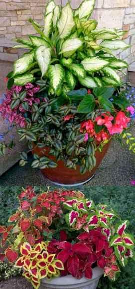 02 fabulous summer container garden flowers ideas