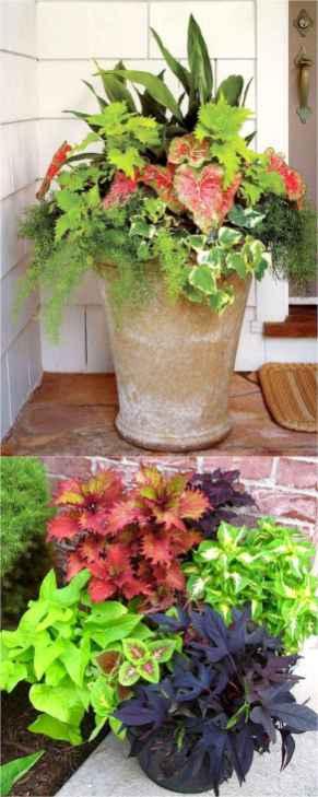 03 fabulous summer container garden flowers ideas