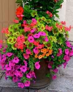 05 fabulous summer container garden flowers ideas