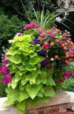 49 fabulous summer container garden flowers ideas