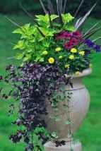 57 fabulous summer container garden flowers ideas
