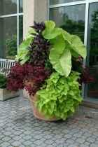 65 fabulous summer container garden flowers ideas