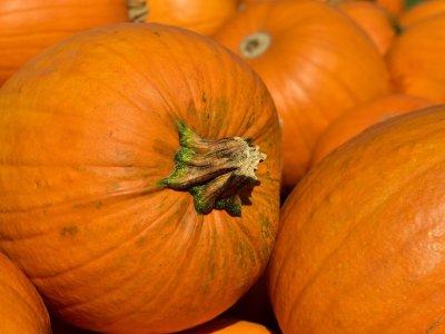 pumpkins, fall, harvest-3636243.jpg
