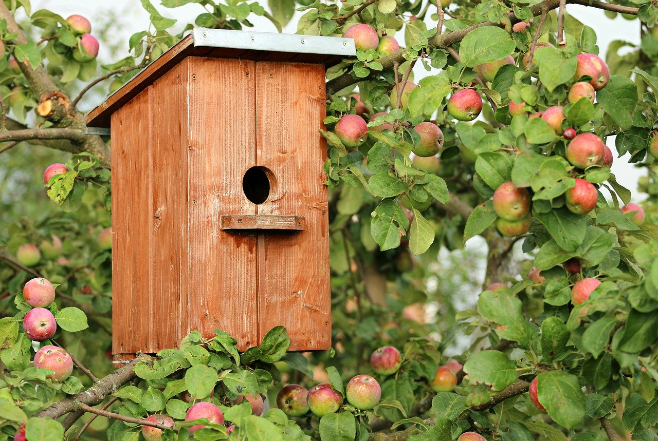 birdhouse, house, apple tree-1537806.jpg