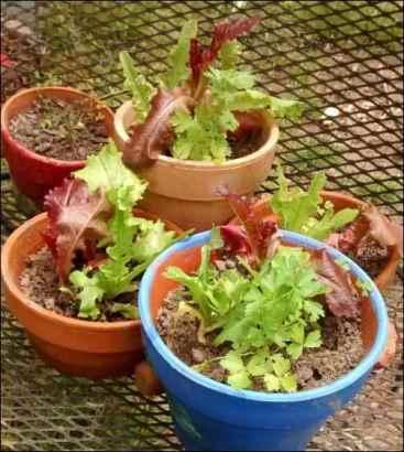 Farmer's Market Products like lettuce