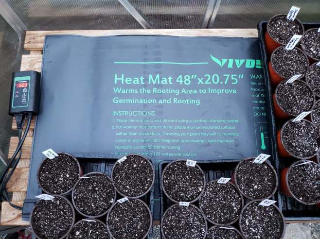A seedling heat mat is shown with 4 inch pots full of seed start soil mix inside of trays on top of the heat mat. Start seeds using heat to help with seed germination.
