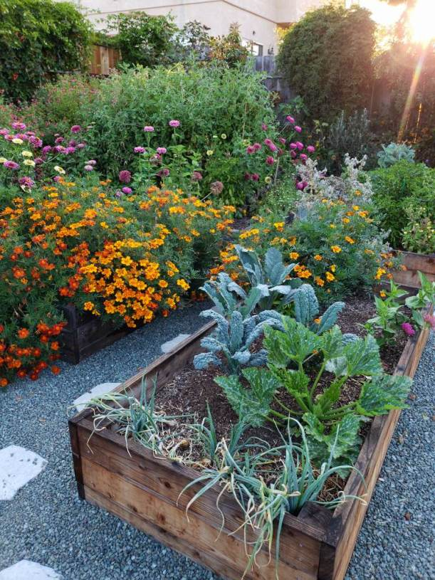 A photo of raised garden beds, overflowing with orange and red marigold flowers, onions, squash plants, tall tomatoes, and pink zinnias. A pollinators paradise.