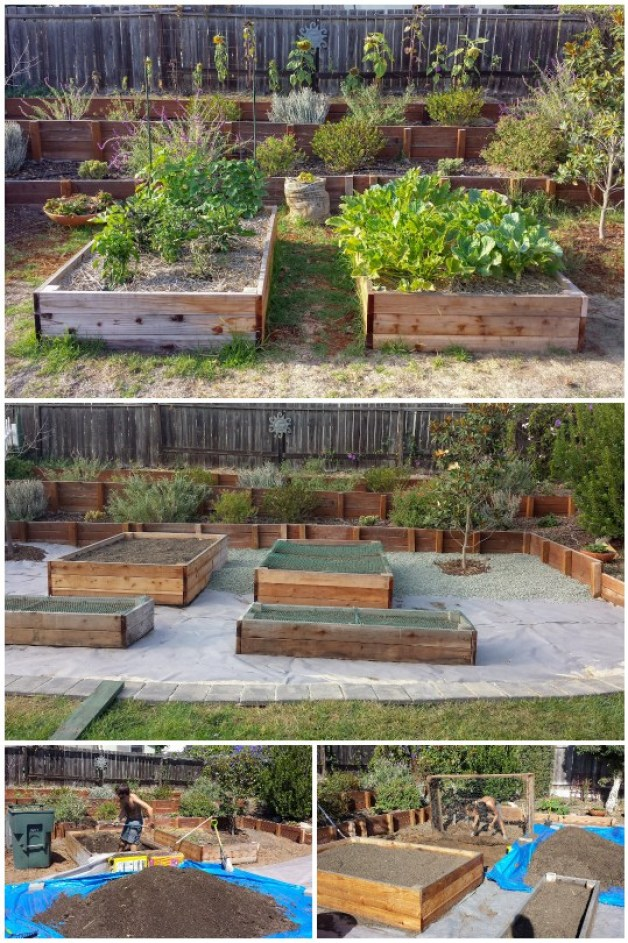 One photo shows wooden raised garden beds sitting in the middle of a weedy lawn. Next, it shows a man working in the garden to shovel all the soil out of these beds, because they need to be moved. Then the beds are empty and being lifted. Next, the grass has been removed and weed block fabric is laid out across the yard where the beds once were, and they're put back on top of of it, now protected from weeds below. Small gravel is being added on top of the fabric, between and around the garden beds.