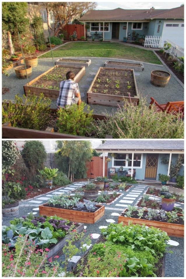 Two photos. One shows four simple raised garden beds, and the other half of the yard by the house is grass. The second photo shows those same raised beds, but now all the grass in the other half of the yard has been removed and replaced with stone pathways and planting areas, full of flowering perennials, potted plants, and edible shrubs.