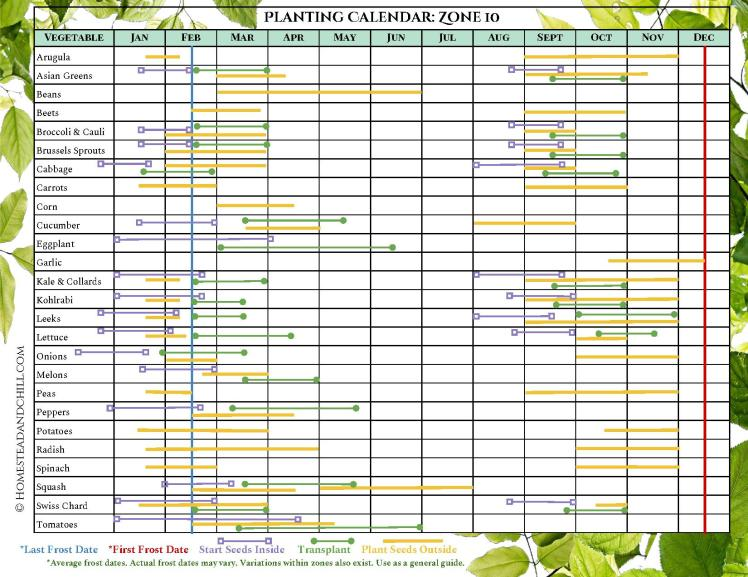An image of a planting calendar for Zone 10 growing region. It is a chart that shows what months different vegetables should be either started from seed, transplanted into the garden and the first and last frost dates.