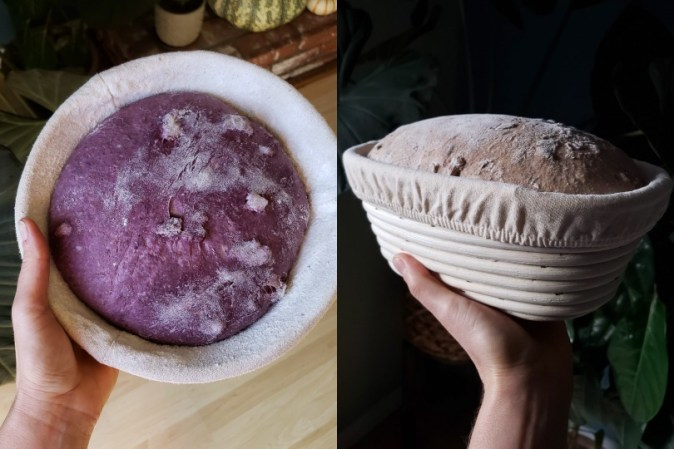 On the left is a round boule banneton, filled with bright purple dough. This was made with black nebula (purple) carrots from the garden. On the right, an oval batard banneton, full of a whole wheat walnut loaf. It is nice and puffy after a night in the fridge. Each banneton basket is lined with cloth in the inside.