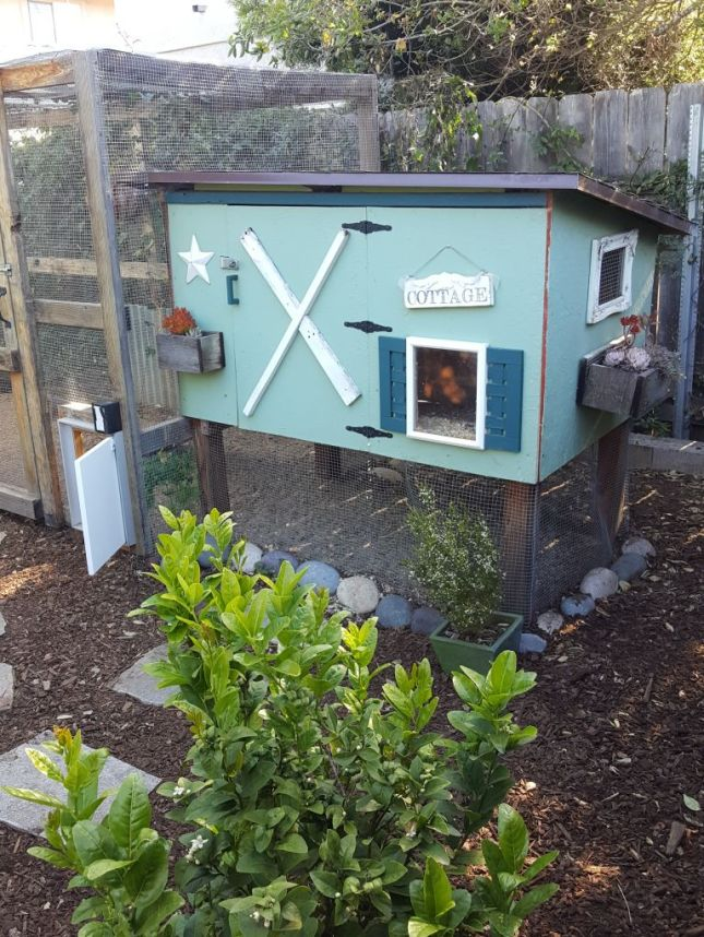 The coop and chicken run are shown once again after a few years of use and a new paint job on the coop. Both structures remain sound in their construction and have kept out all predators to date.