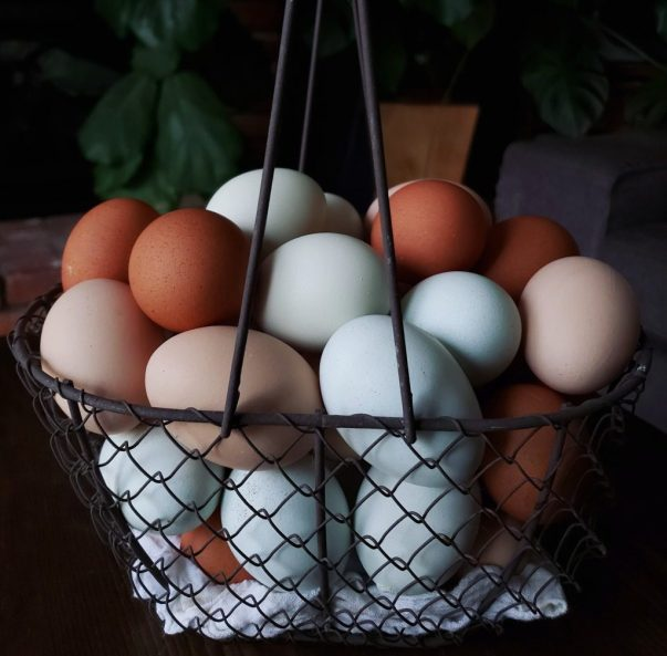 A basket full of organic, ethical, backyard chicken eggs. Some of the eggs are blue, green, light brown, and very dark brown with speckles.