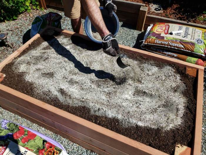 Sprinkling in a combination of kelp, alfalfa and neem meals to the top of the soil once the raised bed is full.  This will be scratched into the top few inches of the soil, and watered in.  We also added some rock dust here, and earlier when the bed was only half-full.