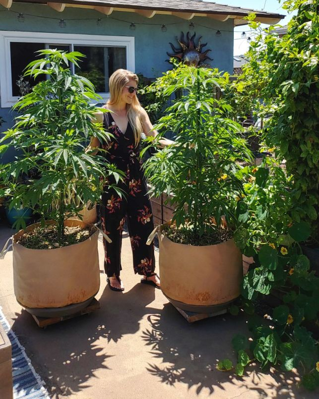 A blonde woman in a black and floral jumpsuit stands between two cannabis plants, on a back yard garden patio. The plants are in large fabric grow bags of 25 gallon size. The plants are still young, and only about four feet tall. Since they're in large bags, they are already taller than the woman.