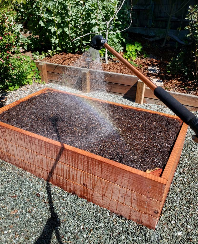 An image of a watering wand hovering over a raised bed, spraying it. The bed is empty with no plants - it was brand new. The bed is made of redwood, and is about 5 feet by 3 feet and 18 inches tall. Water is running down the sides of the bed, wetting the pink wood.