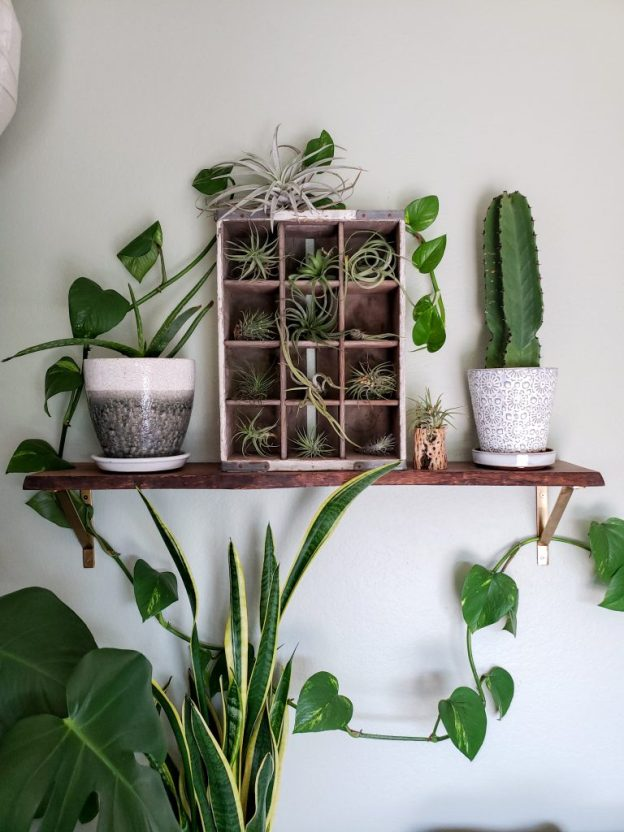 A indoor shelf with several plants on it, against a plain white wall. There is a cactus in a white pot, a small aloe plant in a white and grey pot. There is a vine with leaves circling around the pots. Also, a vintage wood soda crate with 12 cubbies, with a small air plant in each cubby.