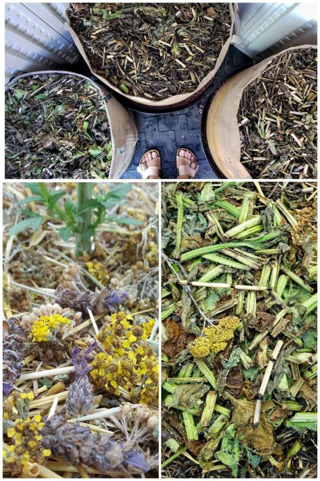 A three way image collage, the first image shows two feet standing amongst three 25 gallon fabric grow bags. Each one is heavily mulched with dynamic accumulator plants. The second image shows a close up of some of the mulch, yarrow flowers, horsetail, and lavender flowers  are visible. The third image shows another close up image of the mulch, yarrow, fava beans, borage, and horsetail are visible amongst the decaying mulch material which will turn into rich organic matter in time.