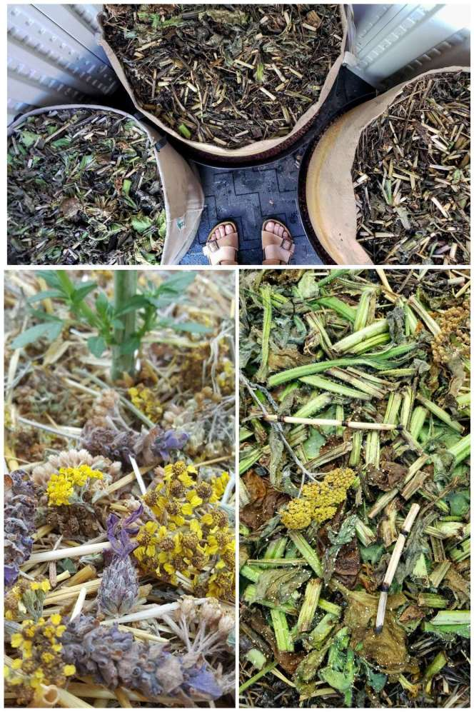 A three part image collage, the first image shows the tops of three 25 gallon fabric grow bags that are heavily mulched with a variety of plants. The second image shows a close up of the mulch which shows a variety of yarrow flowers, lavender flowers, horsetail, and others. The third image shows another close up image of mulch that contains fava bean plant material, horsetail, and yarrow.