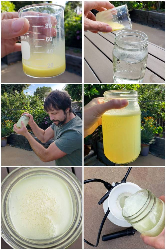 A six part collage, showing the silica/neem oil in the beaker being added to a quart of warm water, it is then capped with a lid and shaken repeatedly to emulsify the neem oil in the water. It is then added to a larger quantity of water in a spray cannister, where it can now be used in the garden.